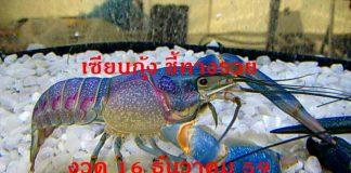 เซียนกุ้ง ชี้ทางรวย งวด 16 ธันวาคม 2559